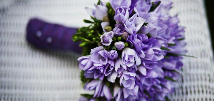 Bukiet fioletowych kwiatów